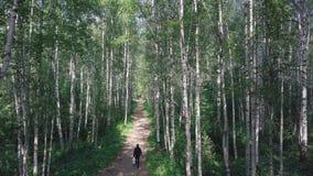 Punto di vista superiore dell'uomo che cammina nel legno sul percorso clip Bello giorno di estate soleggiato nella foresta stock footage
