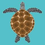 Punto di vista superiore della tartaruga illustrazione vettoriale