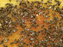 Punto di vista superiore delle api di lavoro su un favo Immagine Stock Libera da Diritti