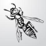 Punto di vista superiore di una vespa su un fondo grigio Fotografia Stock