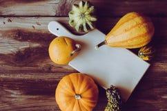 Punto di vista superiore di mini zucche sveglie e del bordo bianco sulla tavola rustica Fotografia Stock