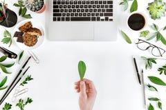 Punto di vista superiore parziale della persona che tiene foglia verde nel luogo di lavoro con il computer portatile, la tazza di Fotografia Stock