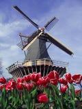 Punto di vista tipical olandese del mulino e dei tulipani fotografia stock libera da diritti