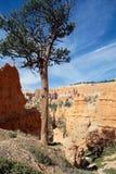 Punto di vista verticale di Bryce Canyon, U.S.A. Immagini Stock Libere da Diritti