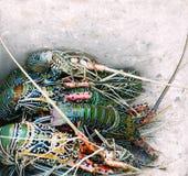 Punto di vista vicino delle aragoste fresche in una scatola Fotografie Stock