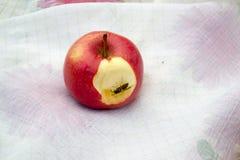 Punto di vista vicino di una vespa su una mela immagini stock libere da diritti