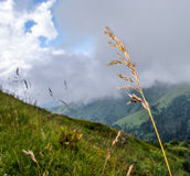 Punto en el primero plano y la hierba y prado cubierto con las nubes Imagen de archivo