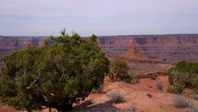Punto en Utah - visión granangular del caballo muerto almacen de video