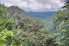 Punto escénico de la perspectiva en la reserva ecológica de Cotacachi Cayapas Imagen de archivo libre de regalías