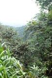 Punto escénico de la perspectiva en la reserva ecológica de Cotacachi Cayapas Imagen de archivo