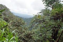 Punto escénico de la perspectiva en la reserva ecológica de Cotacachi Cayapas Foto de archivo