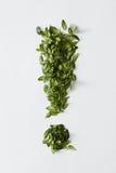 Punto esclamativo dalle foglie verdi Fotografie Stock