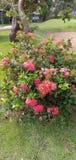 Punto hermoso de la flor imágenes de archivo libres de regalías