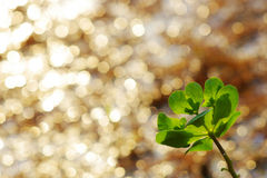 Punto luminoso e pianta sconosciuta Fotografia Stock