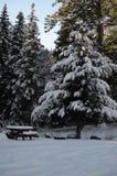 Punto perfettamente pacifico di picnic: Scena di Natale di Snowy su Forest Land nazionale nelle cascate fotografia stock