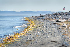 Punto Roberts, Washington State Beach Fotografia Stock