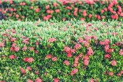 Punto rojo de la flor Fotos de archivo