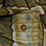 Punto rojo en la pieza marrón del fondo de los BU camboyanos de Junglequeen Foto de archivo