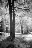 Punto soleado Imagenes de archivo