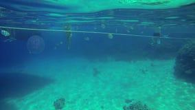 Punto turístico en el mar de Egipto con los animales subacuáticos metrajes