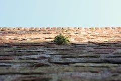Punto verde Fotografia Stock Libera da Diritti