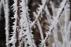 Puntos de Frost en ramas imagenes de archivo