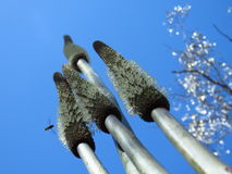Puntos de la flor del árbol de hierba Foto de archivo libre de regalías