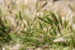 Puntos de la hierba imágenes de archivo libres de regalías