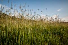 Puntos de la hierba con el cielo azul Imagenes de archivo