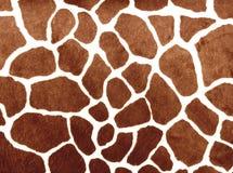 Puntos de la jirafa Imagen de archivo libre de regalías