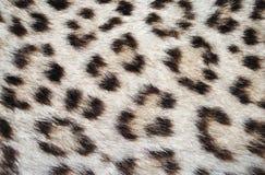 Puntos de la piel del leopardo Imágenes de archivo libres de regalías