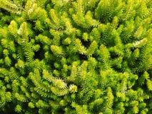 Puntos verdes Fotos de archivo