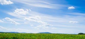 Puntos verdes debajo de un cielo azul en primavera Foto de archivo