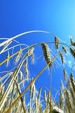 Puntos y cielo azul Imagen de archivo libre de regalías
