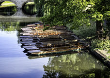 Punts lined up on river in  Cambridge England Royalty Free Stock Photography