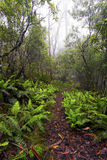 Puntvooruitzicht, het Nationale Park van New England, Au Stock Afbeeldingen
