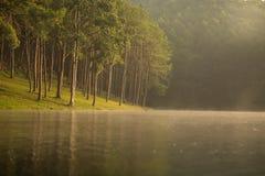 Punzada-ung por la mañana Fotografía de archivo libre de regalías