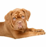 Pup. Dogs and cats in the most different situations and positions Royalty Free Stock Photography