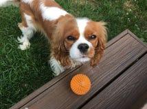 Pup allegro Immagini Stock