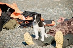 Pup on a beach Royalty Free Stock Photo