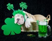 Pup Crawler Stock Image