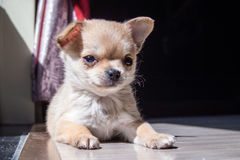 Pup. A cute pup, young dog Stock Photo