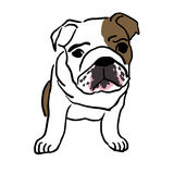 Pup of english bulldog Stock Photos