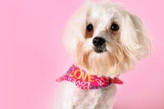 Pup grazioso nel colore rosa immagine stock