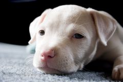 A Pup Named Nina Stock Photo
