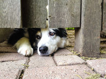 Pup under the fence stock photo