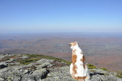 Pup With a View Stock Photos