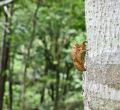 Pupa. Of insect in forest Stock Images