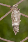 Bagworm Stock Photography