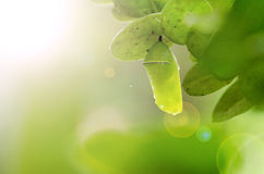 Pupa with sunshine Stock Image